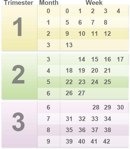 صورة طريقة حساب اشهر الحمل , كيف اعرف فترة حملي