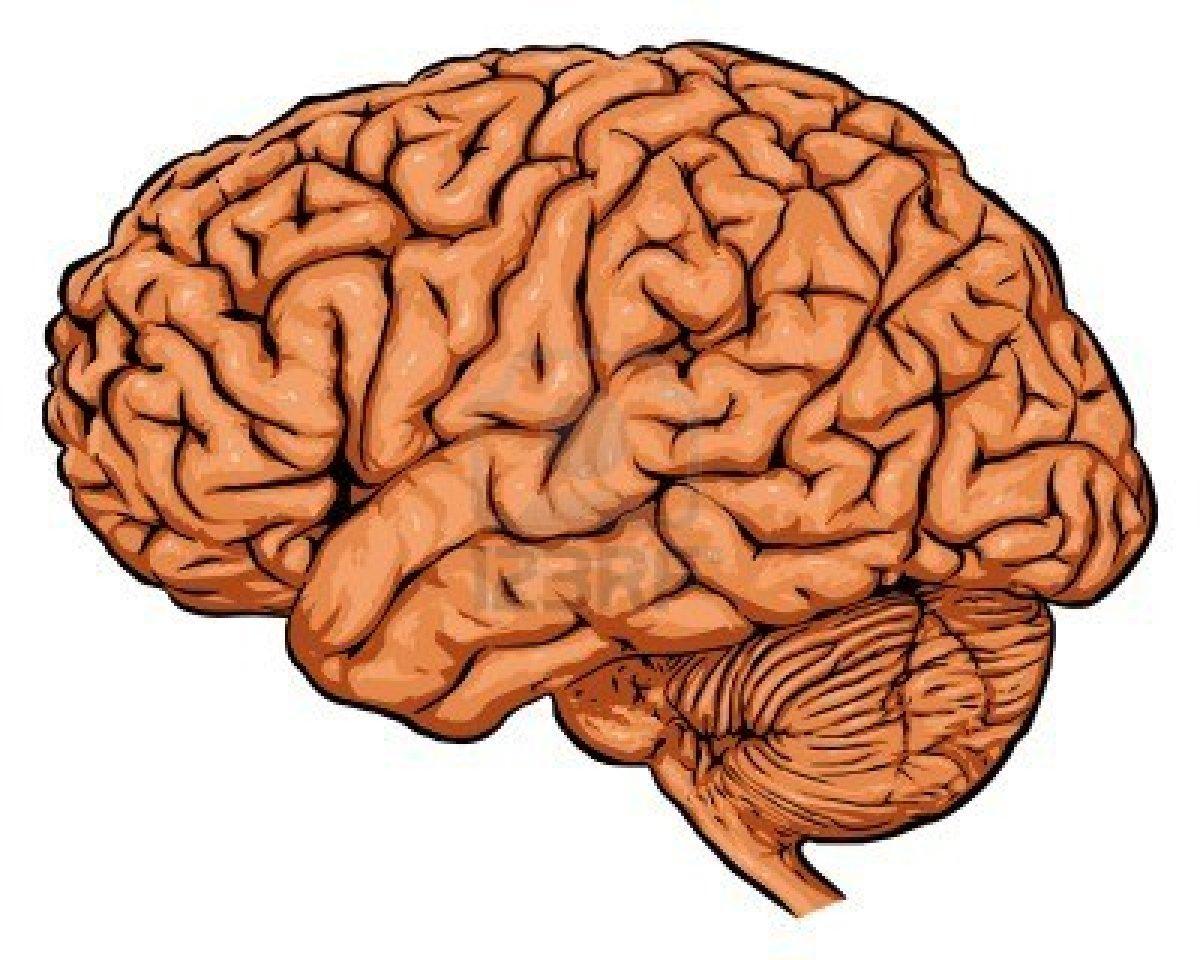 صورة كم يحتاج المخ من الاكسجين الداخل الى الجسم , بحث عن الدماغ البشري