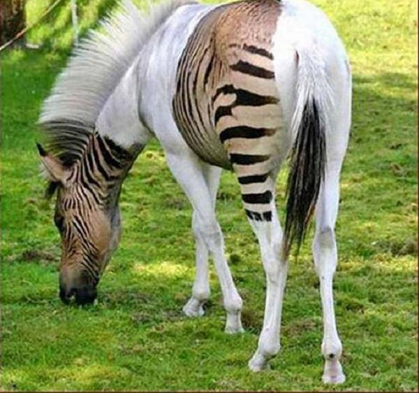صوره تزاوج الحمير والخيول فيديو , طرق التزاوج العجيبة بالصور