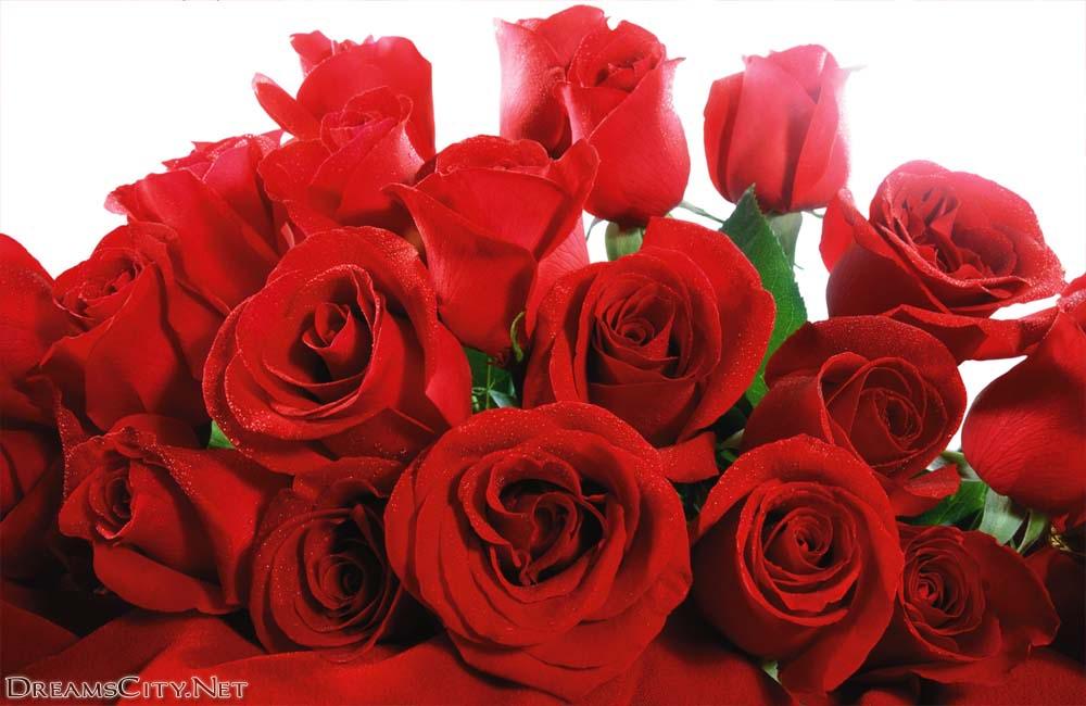 صور صور ورود الحمراء , ورود رومانسية باللون الاحمر