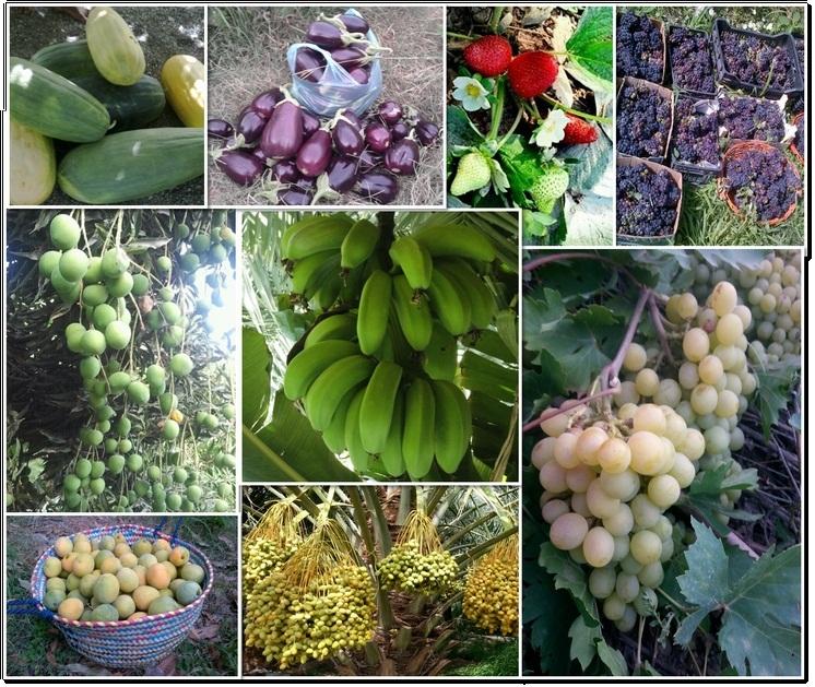 صورة المزروعات الصيفية , اشهر الثمارات في الصيف