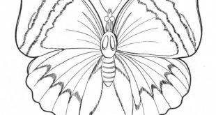 صورة رسم الفراشة , رسومات فراشات جديدة