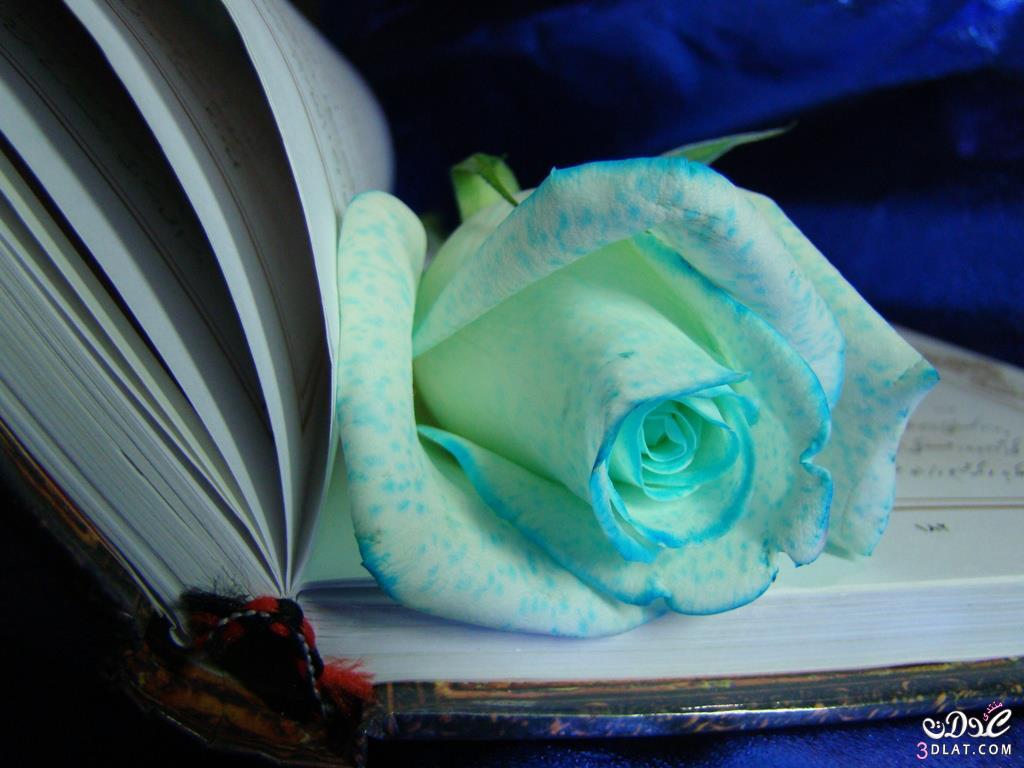 صور صورة اجمل بوكيه ورد , صور ورود متنوعة و جميلة