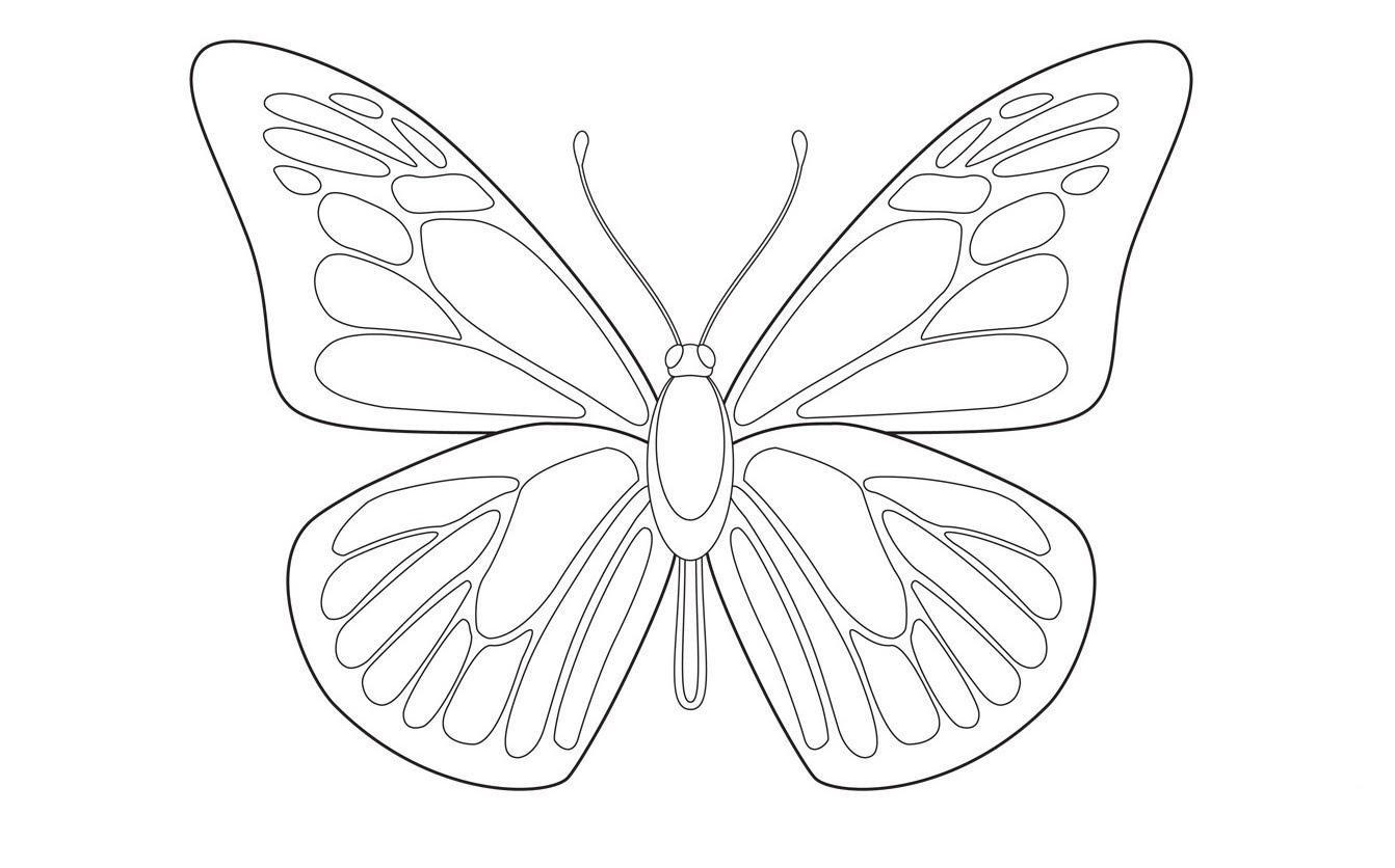 صور رسم الفراشة , رسومات فراشات جديدة