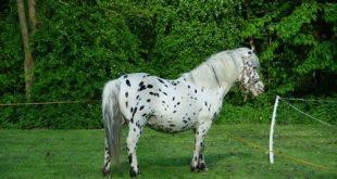 صورة اجمل الصور الحصان العربي , صور افراس وخيول جميلة للغاية