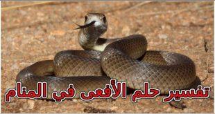 صورة من راى افعى في المنام , تفسير رؤية الافعي لابن شاهين