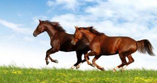 صورة تفسير رؤية الخيل , رؤية الحصان في المنام