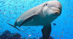 صورة الدلفين في المنام لابن سيرين , رؤية الدولفين في الحلم