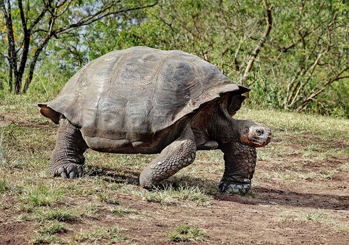 صورة ما اطول الحيوانات عمرا, اكبر حيوان في العالم 323265