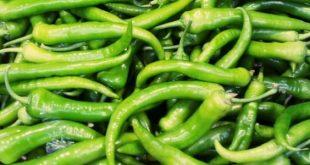 فوائد الفلفل الأخضر الحار, ما هي فوائد الفلفل الأخضر الحار