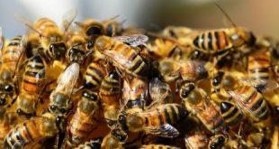 صورة تفسير رؤيا خلية النحل في المنام, تفسير حلم النحل يطاردني