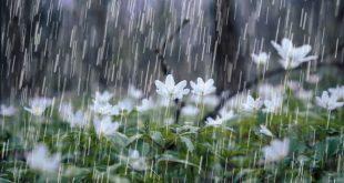 صورة رؤية المطر الغزير, تفسير حلم نزول المطر بغزارة